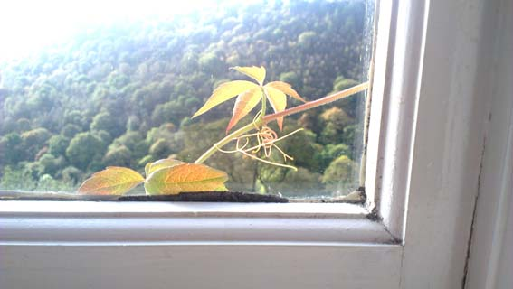 Photograph of a climber against a window pane by Hannah Foley. All rights reserved (www.owlingabout.co.uk).