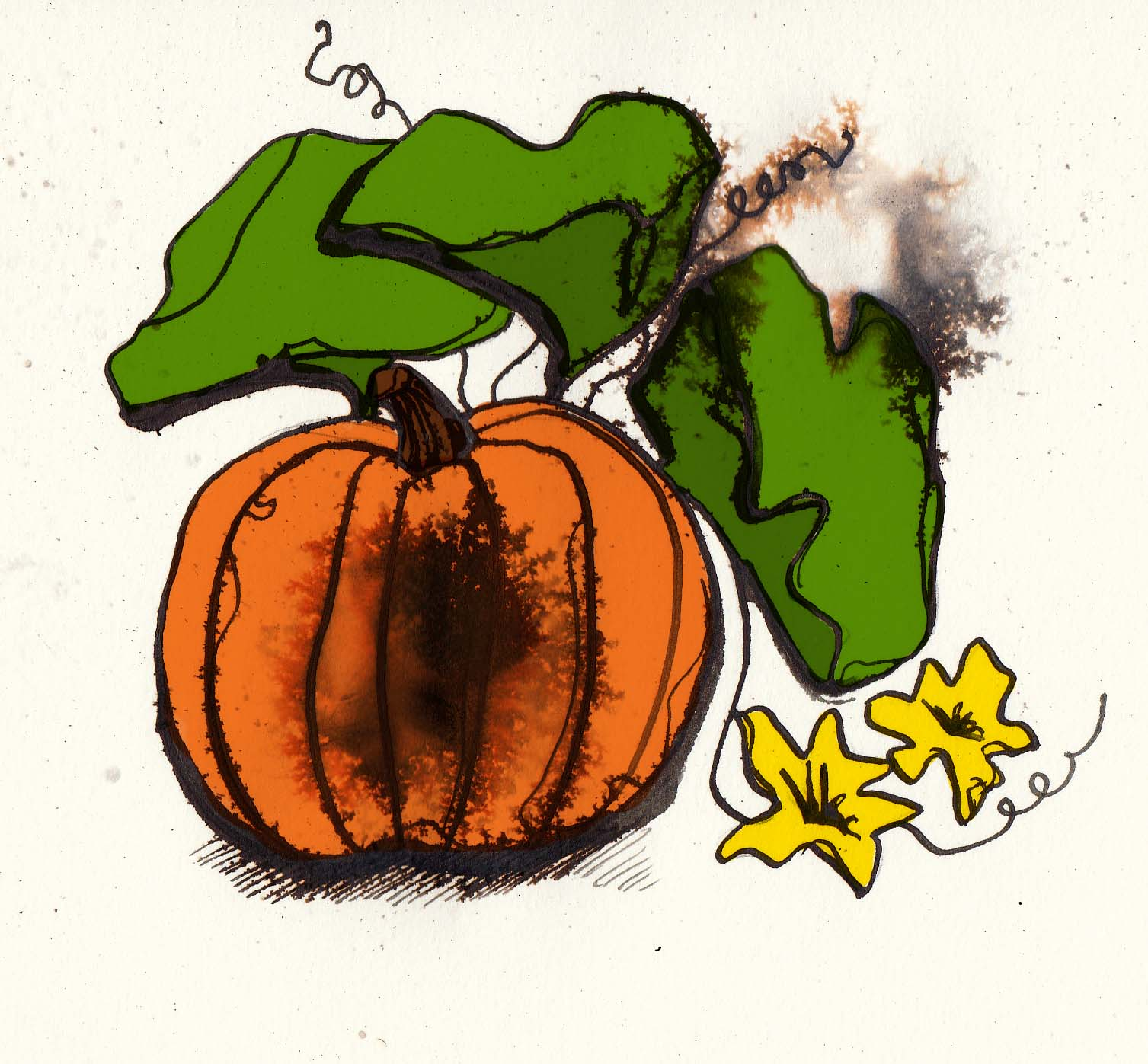Pumpkin illustration by Hannah Foley. All rights reserved (www.owlingabout.co.uk)