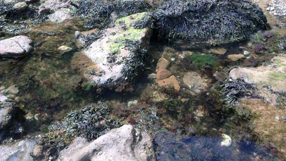 Photo of a rockpool by Hannah Foley. All rights reserved (www.owlingabout.co.uk).