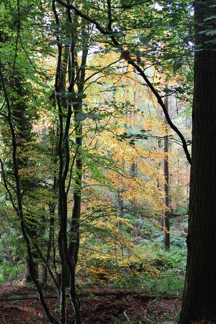 Photograph of Autumn woodland by Richard Foley. All rights reserved (www.owlingabout.co.uk).