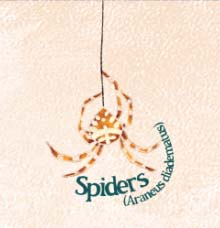 spider, orange, brown, wildlife, natural history, illustration, illustrator, hannah foley, children, educational, school,