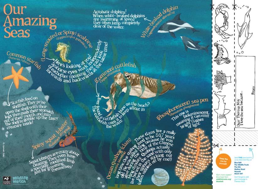 sea, ocean, blue, cuttle fish, spiny squat lobster, starfish, white-sided dolphin, seahorse, quahog clam, sea pen, marine conservation zones, blue belt, children, the wildlife trusts, illustration, illustrator, Hannah Foley
