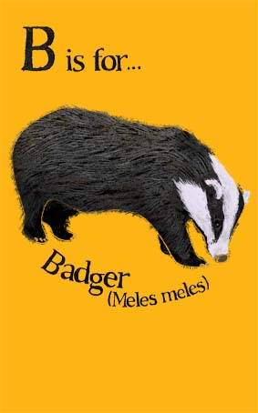 yellow, black, white, badger, meles meles, natural history, illustration, illustrator, Hannah Foley, alphabet, educational, children, kids, family