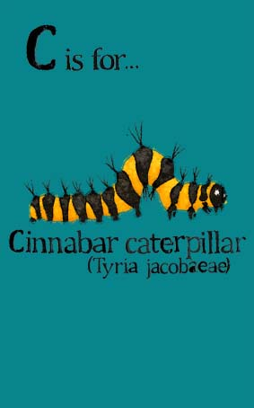 turquoise, caterpillar, yellow, gold, orange, black, cinnabar, Hannah Foley, illustrator, illustration, children, kids, education, natural history, biology, insects