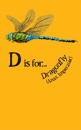 D is for Dragonfly by Hannah Foley. All rights reserved (www.owlingabout.co.uk)
