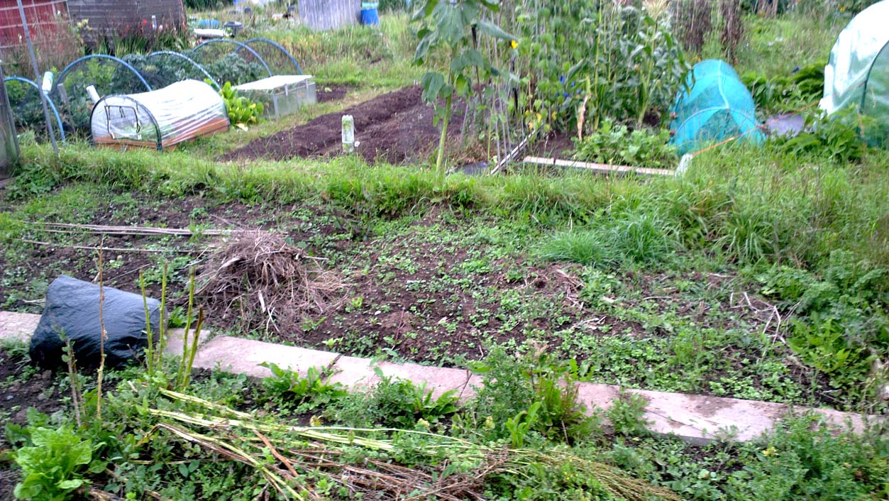 allotment, weeds, patch, growing things, vegetables, green fingers
