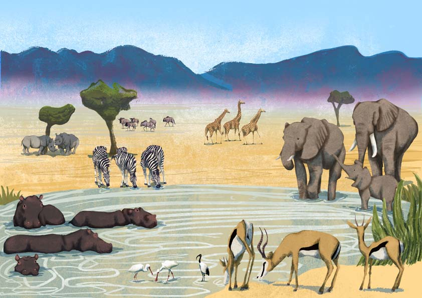 Hannah Foley, illustrator, illustration, safari, education, non-fiction, children, kids, family, elephants, ibis, egret, gazelle, hippo, hippopotamus, zebra, giraffe, wildebeest, mountains, rhinoceros, rhino, waterhole
