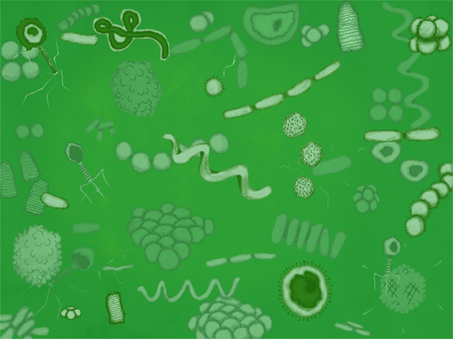 microbes, viruses, science, education, Hannah Foley, illustrator, children, biology