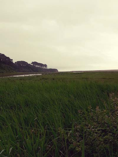Photo of the Otter Estuary by Hannah Foley. All right reserved (www.owlingabout.co.uk)