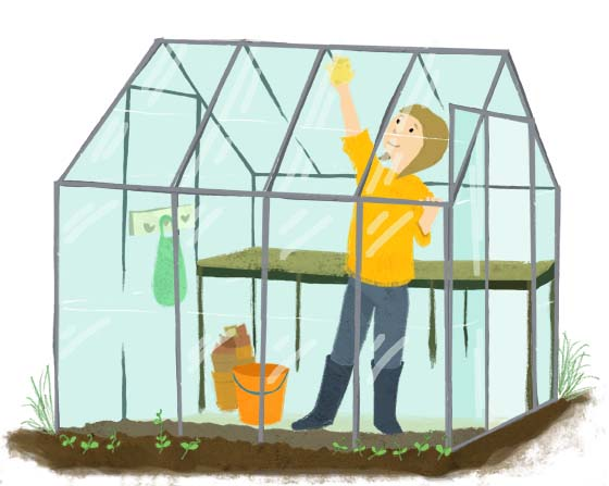 field peas, greenhouse, allotment, autumn, gardening, jobs, chores, growing, gardening, hannah foley, illustration, illustrator, lifestyle illustration