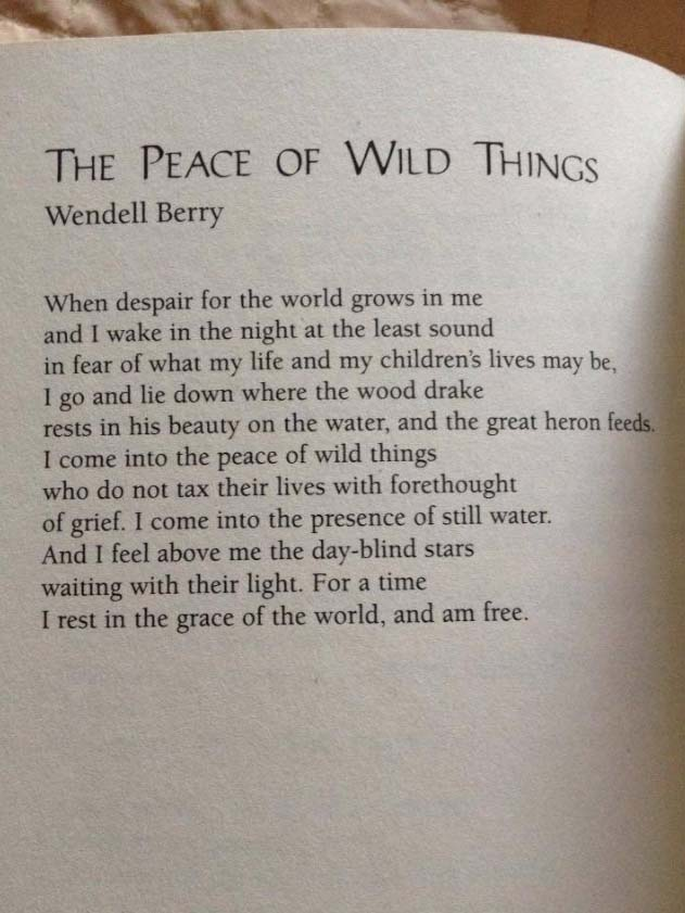 With thanks to Mike Philpot for posting this on poem on Twitter. Wendall Berry. The Peace of Wild Things.