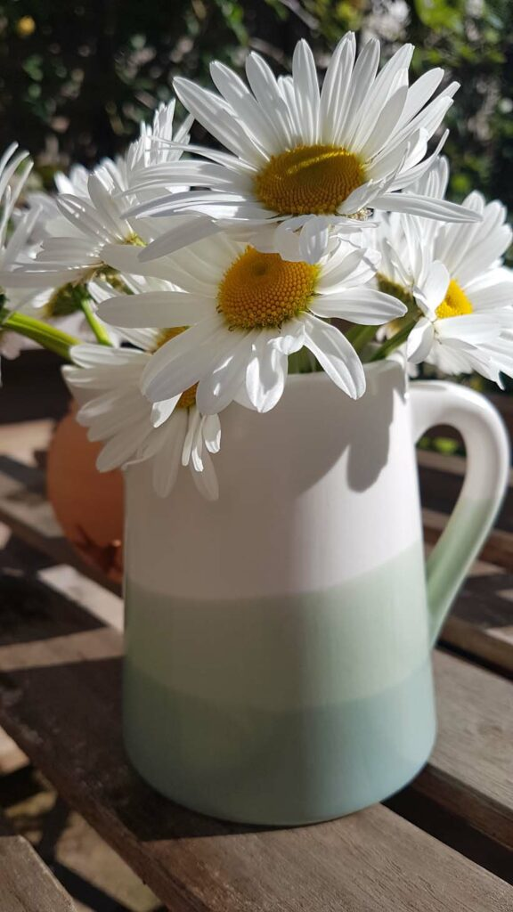 Daisies in a Jug by Hannah Foley. All rights (www.hannah-foley.co.uk)