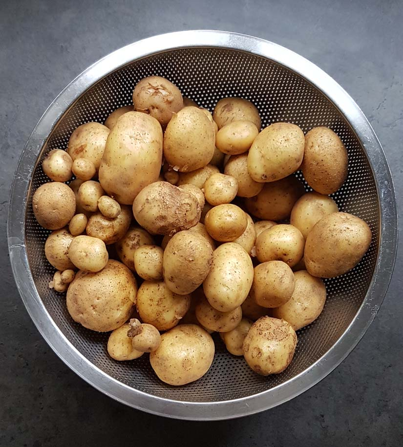 New potatoes in a colander by Hannah Foley. All rights reserved (www.hannah-foley.co.uk)